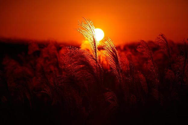 写真: 『秋焼の頃。。。』