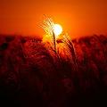 『秋焼の頃。。。』