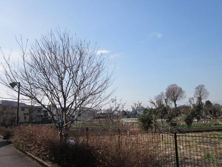町田徒歩10分強圏の田舎風景