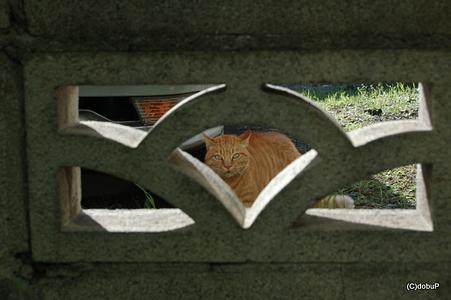 お、そこの君も入りますか?