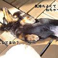 Photos: choco7