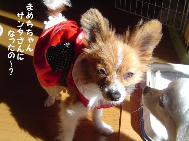 Photos: まめち 11月 003