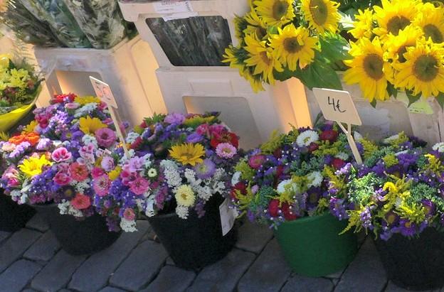 Photos: ヘルシンキの夏のお花