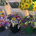 ヘルシンキの夏のお花