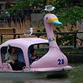 水先案内鳥