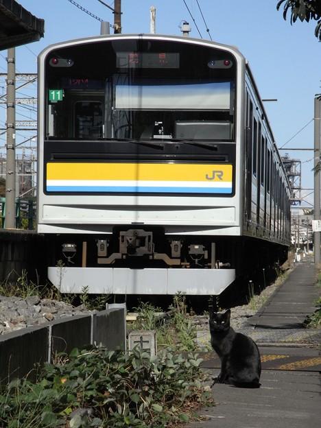 Photos: R0029300 - 黒猫車掌
