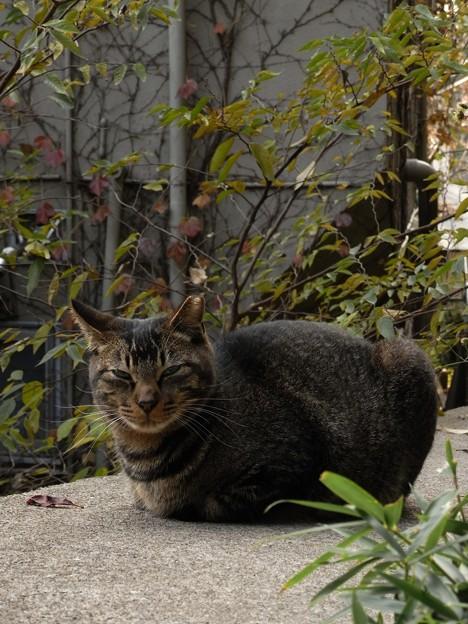 山手公園付近の猫たち(R0032137)