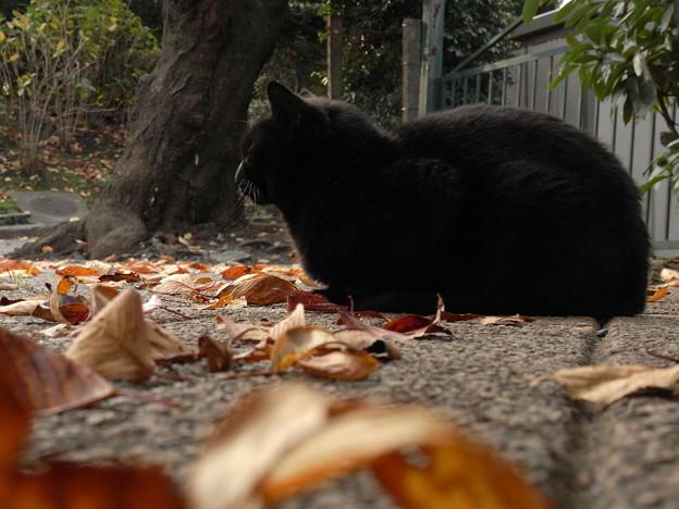 山手公園付近の猫たち(R0032146)
