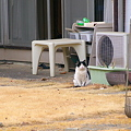 Photos: 飼い猫なうし柄さん