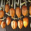 Photos: 2009/11/08 04 干し柿(1週間)