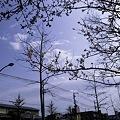 Photos: 2010-03-22の空