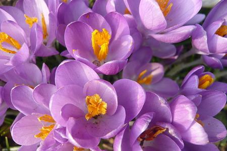 春の日ざし…