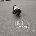 写真: jack0007