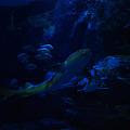 写真: サメ