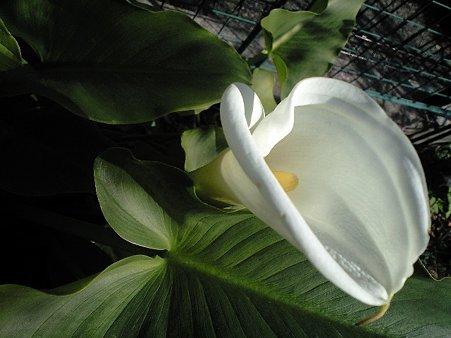 2010 084