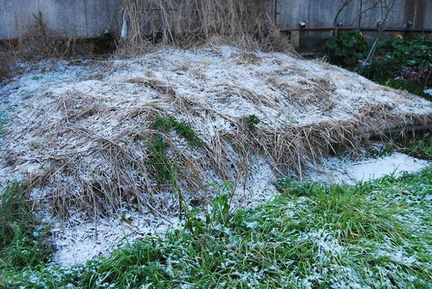 4年ぶりに宮崎市も雪化粧1