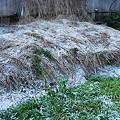 Photos: 4年ぶりに宮崎市も雪化粧1