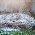 Photos: 4年ぶりに宮崎市も雪化粧3