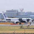 Narita International Airport ANA FLY!PANDA