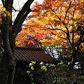 写真: 20091218_135816