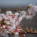 Photos: 20110410_121530