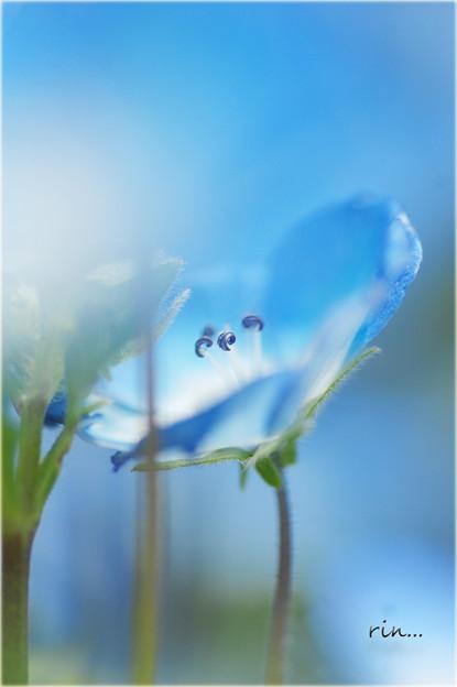 写真: blueeyes・・・。