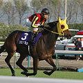 Photos: ブエナビスタ@秋華賞 返し馬