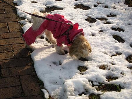 久しぶりの雪のにおい