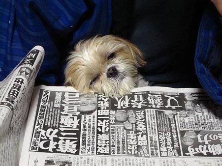 新聞読めないよ~1