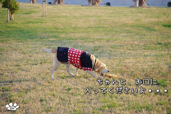 s-myu2009_1108(149)