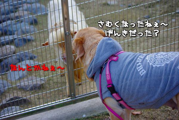 s-myu2009_1227_3