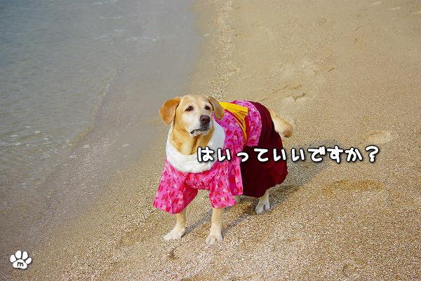 s-myu2009_1230_6