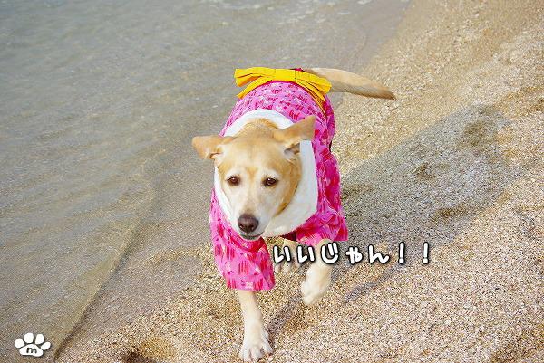 s-myu2009_1230_7