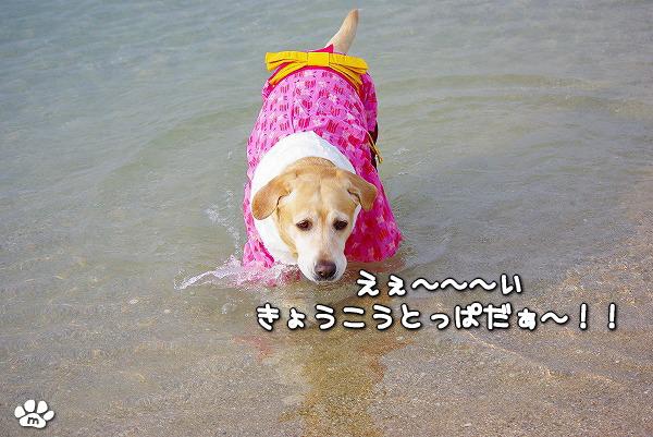 s-myu2009_1230(110)
