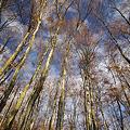 美人林に魅せられ