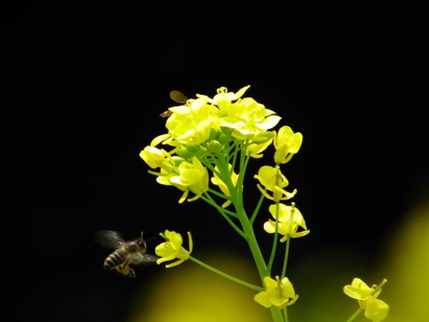 ブンブンブン 蜂が飛ぶ~♪