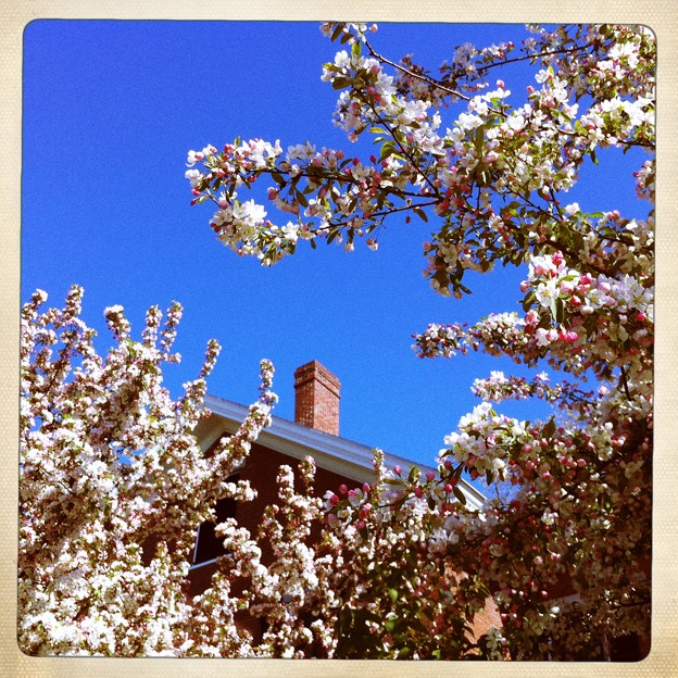 Crabapples and the House 5-6-12