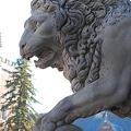 Lion@museum 11-08-09
