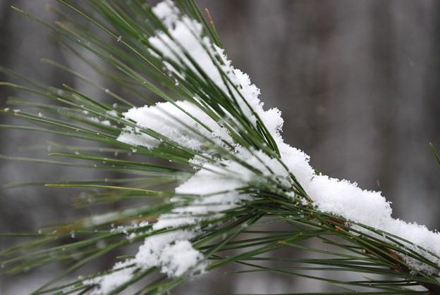 Photos: Snow on Pine 12-7-08