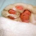 Photos: Billy's paw 1-4-10