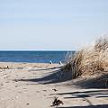 写真: Sand Dune 3-5-10
