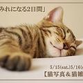 Photos: copy1