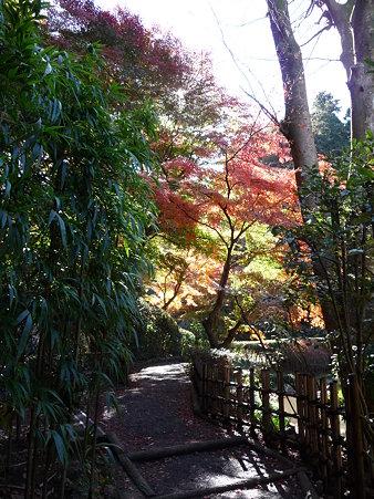 091204-明月院庭園 (84)