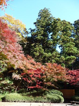 091204-明月院庭園 (39)