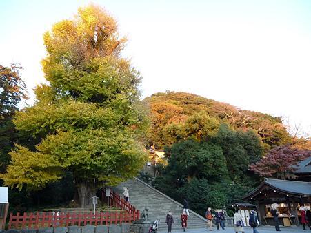 091204-八幡さま (3)