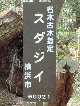 100120-6.西福寺 (11)