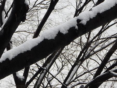 100202-雪(朝) (21)