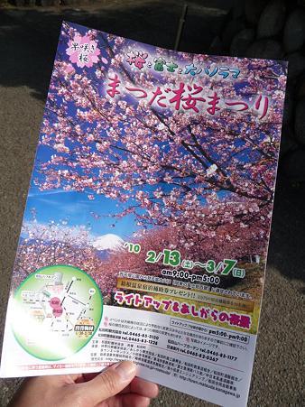 100223-松田山 河津桜 (4)