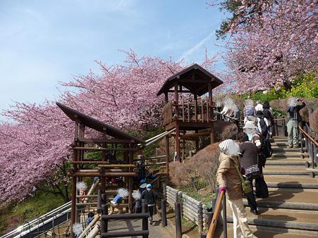 100223-松田山 河津桜 (64)
