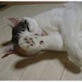 Photos: ふぅ~